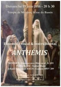 Affiche Anthemis